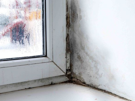 Yes, You Can Stop Mold Without Harsh Chemicals!