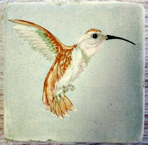 Israeli Bath Hummingbird