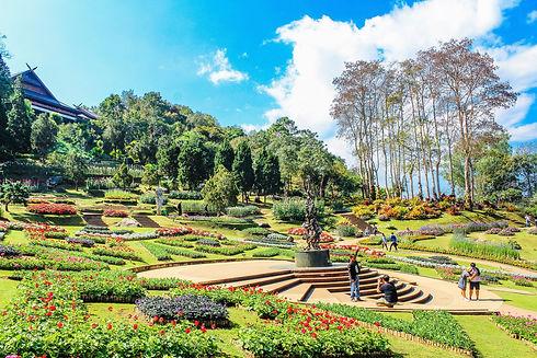 attraction-beautiful-bloom-733205.jpg