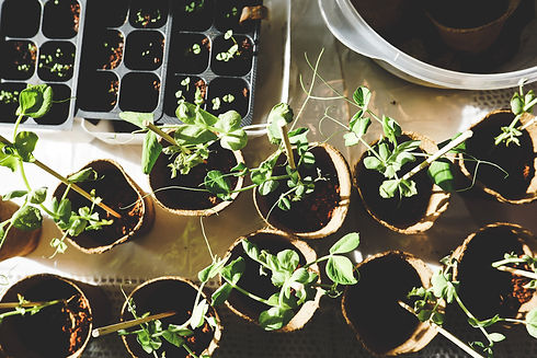 garden-growth-plants-1105019.jpg