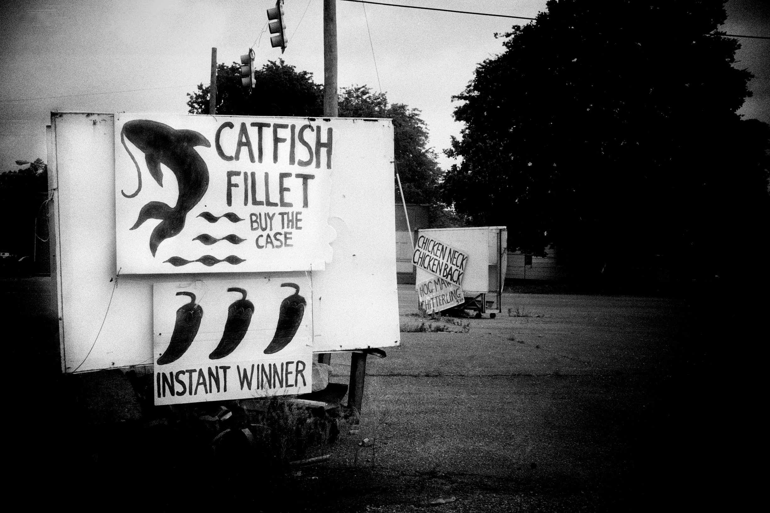Catfish Fillet