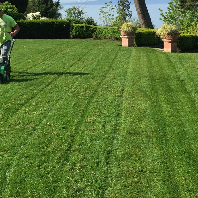 Lawn Care Bellingham
