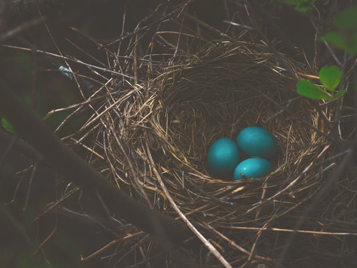 Build Your Mama Nest