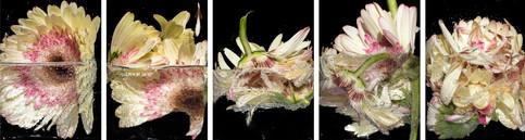 Drowning Petals