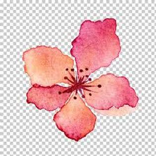 petalos rosa acuarela-02.jpg