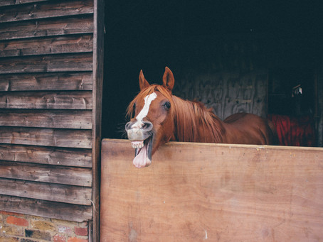 Man Booked For Not Having a Hands-Free Device Fitted to His Horse