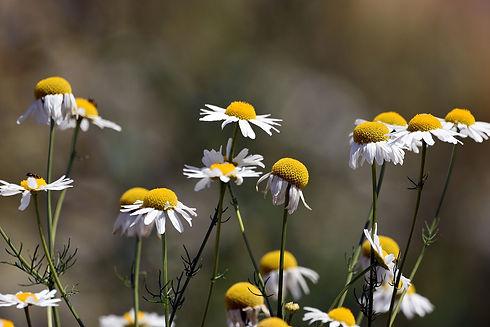 flowers-5428389_1920.jpg