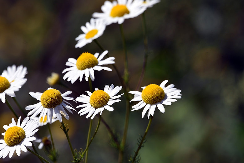 flowers-5419274_1920_edited.jpg