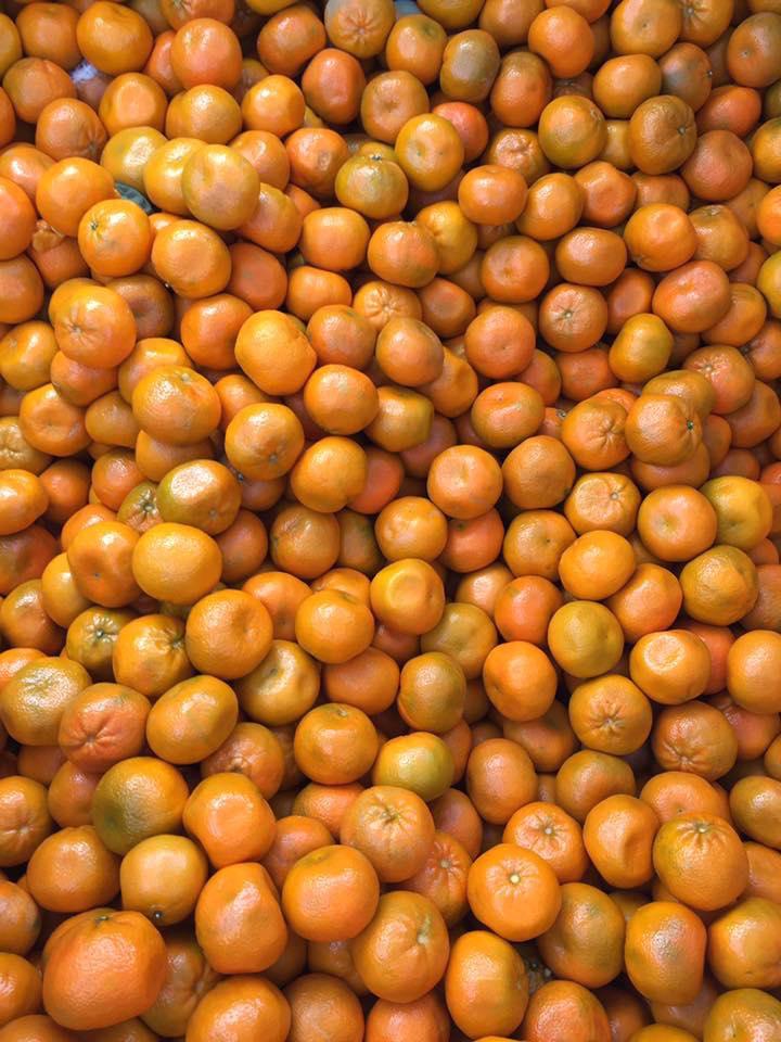 tangerines2