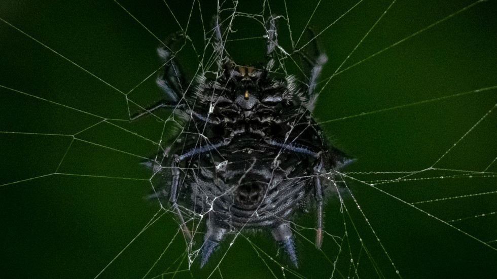 Weird Spiders-Creepy Spiders-Spiders of