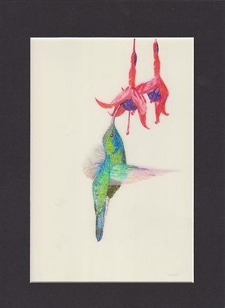 hummingbird%20cream_edited.jpg