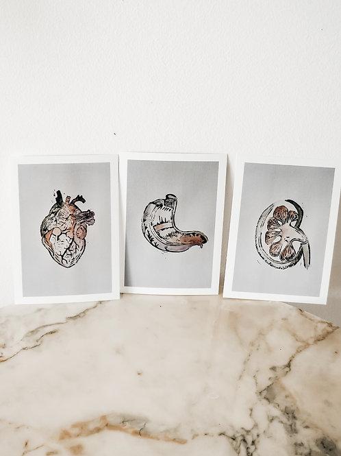 (Postcard-Set) Heart, Kidney, Stomach) Watercolor X Linoleum