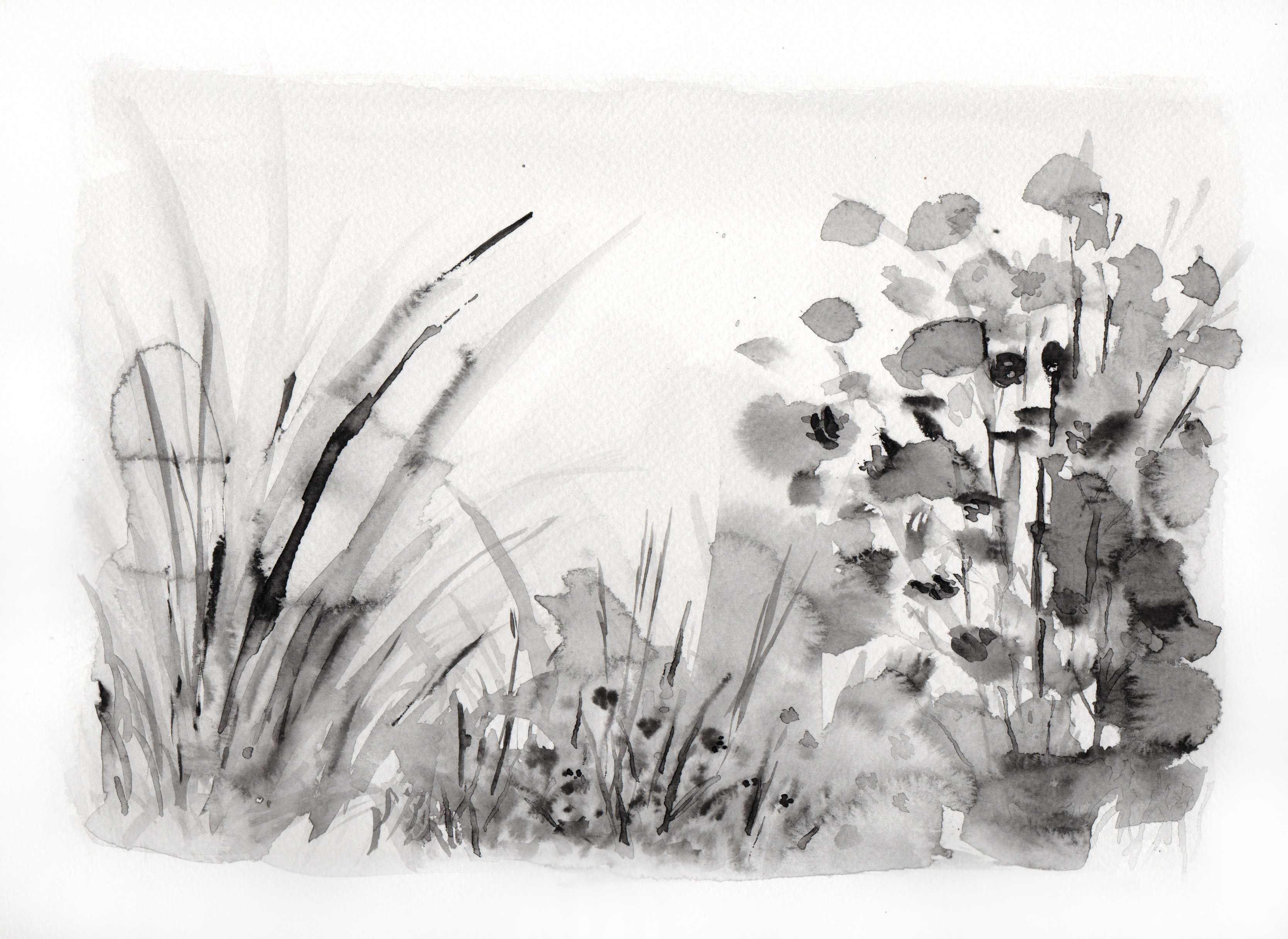 Botanical Study, black landscape no.1