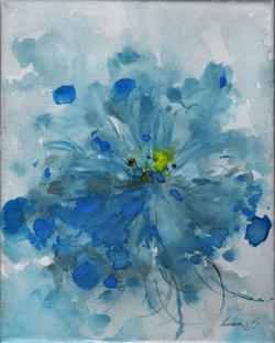 Blue Himalayan Poppy