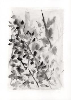 Botanical Study, black portrait no.1