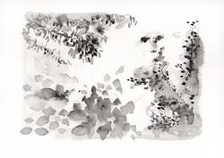 Botanical Study, black landscape no.3