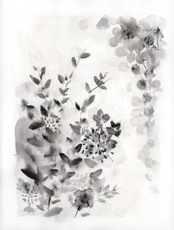 Botanical Study, black portrait no.3