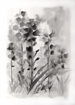 Botanical Study, black portrait no.5