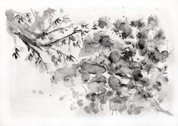 Botanical Study, black landscape no.2