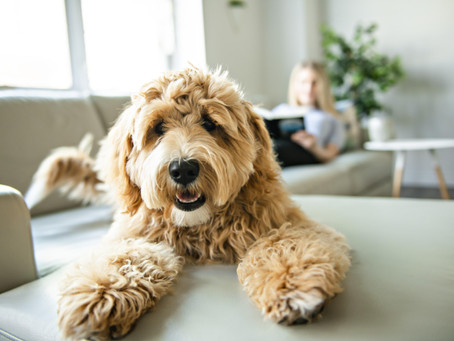 7 Tips For A Pet-Friendly Home