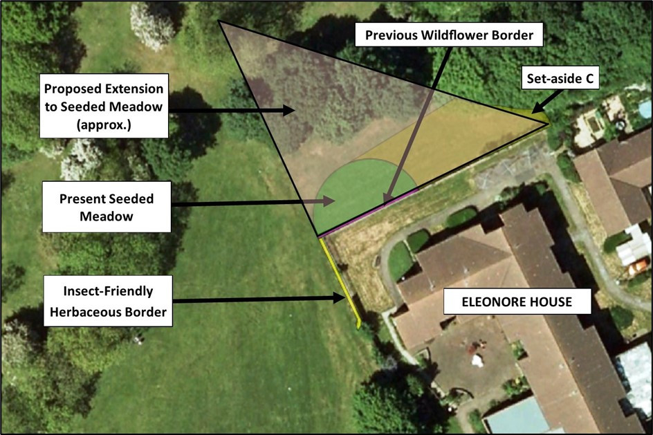 Plan to extend planted meadow in Eastfield Park in 2020