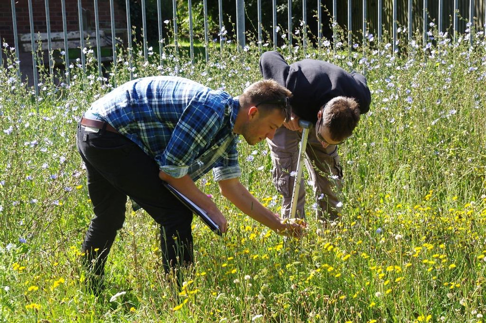 Surveying the seeded meadow in Eastfield Park, July 2017