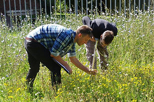 Surveying the meadow - July 2017.JPG