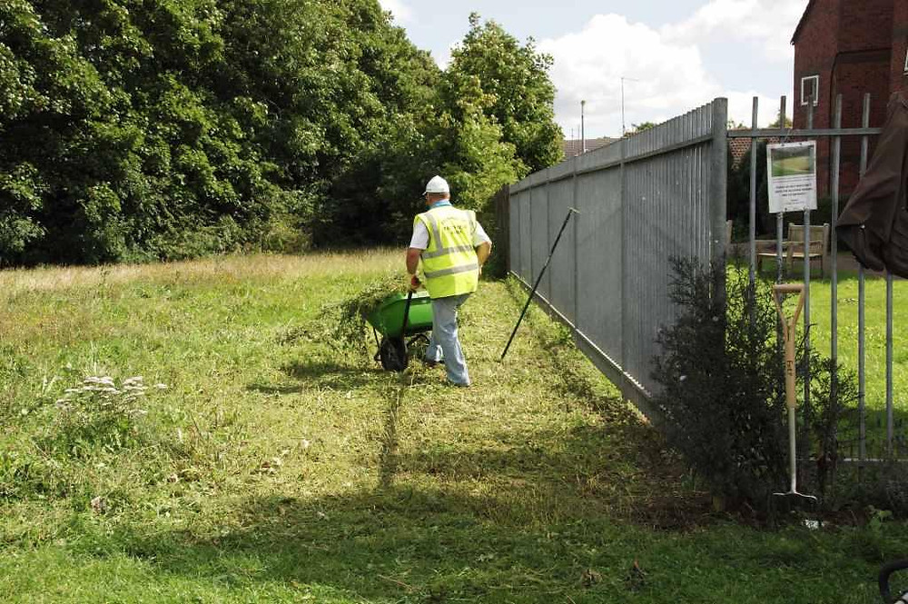 Chris Freeman removing cut vegetation from the seeded meadow in August 2017.