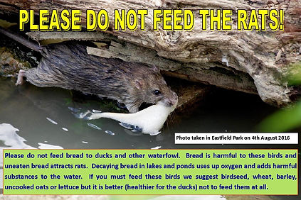 Do not feed the rats revised 2.jpg