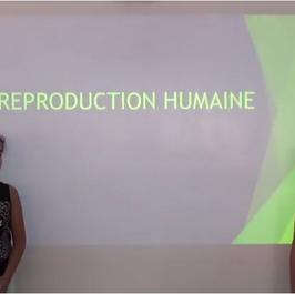 Capsule la reproduction humaine
