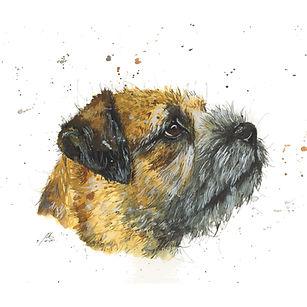 Border Terrier.jpg