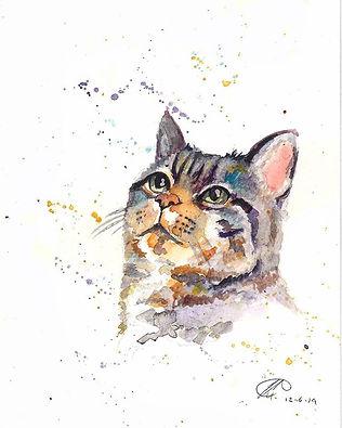 watercolour cat portraits