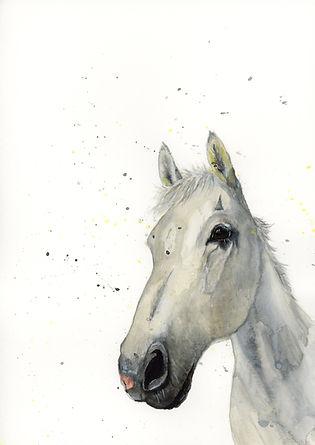 watercolour Horse portraits