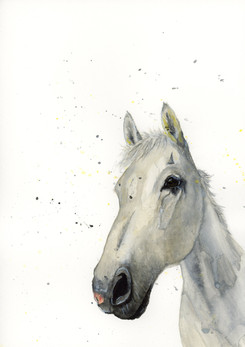 watercolour horse commissions