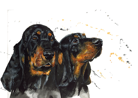 coonhound.png