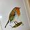 "Thumbnail: Red Robin (10x13"")"