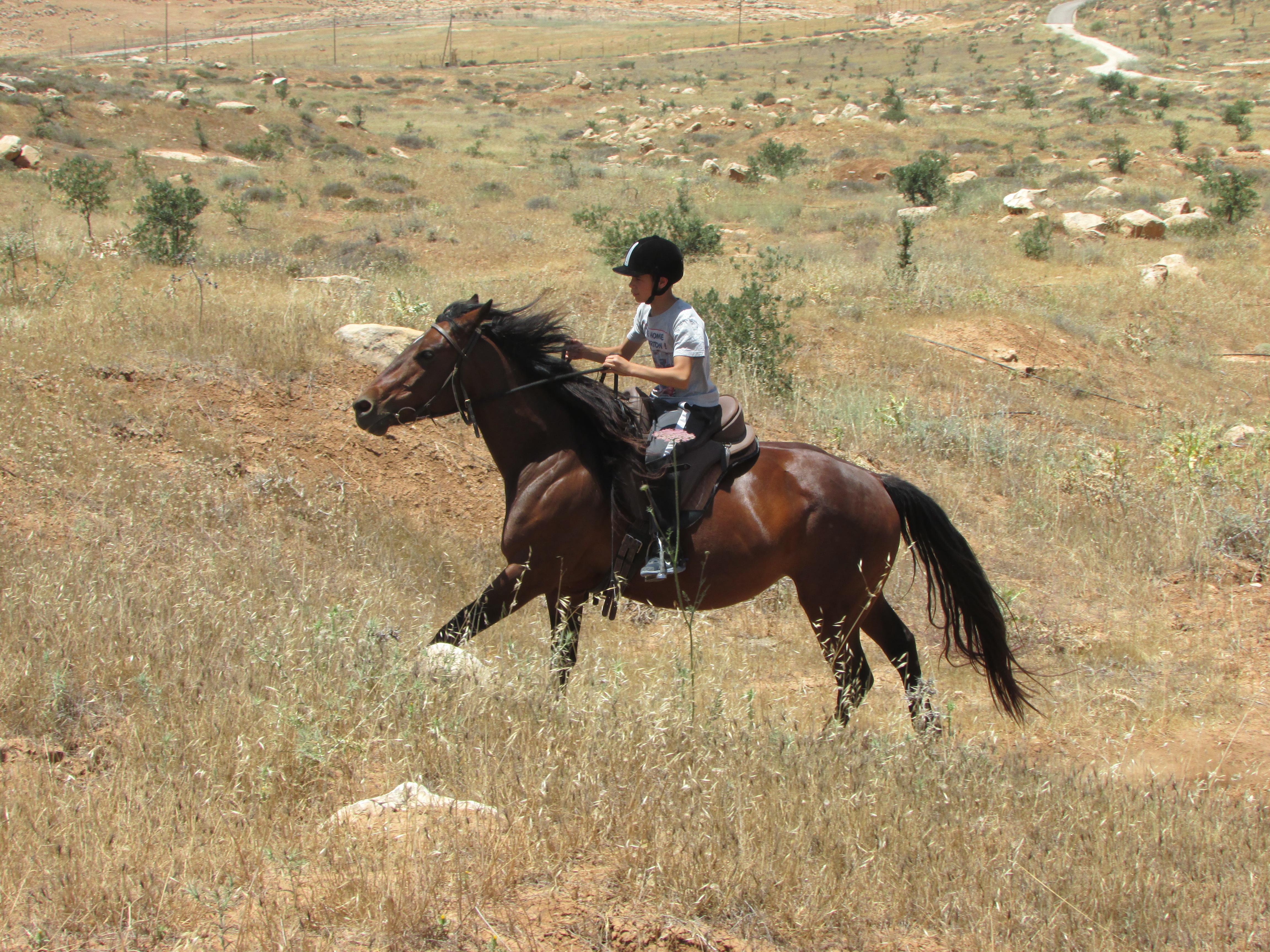 פתיח+סוסים+ברוח+אחרת.JPG