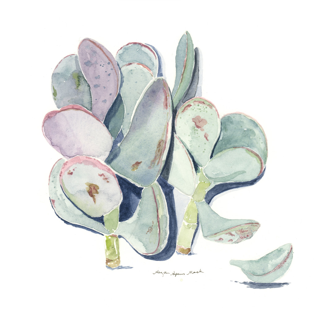 Calico Hearts, Desert Plant Series
