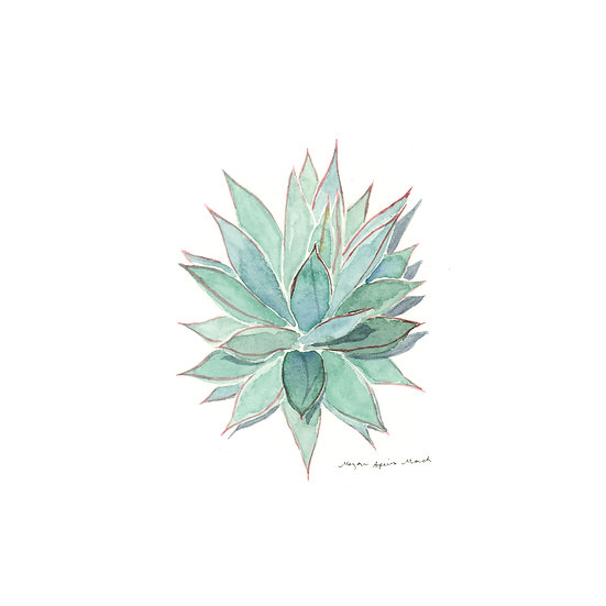 Blue Glow Agave, Desert Plant Series