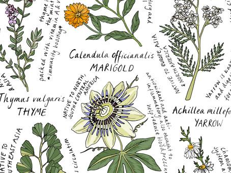 Six Useful Herbs