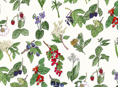 In The Hedgerows : Foraging Through The Seasons