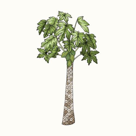 Alex's Papaya Tree