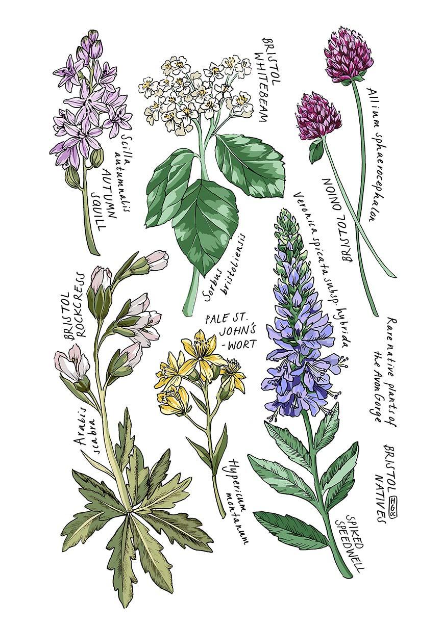 Bristol Native Plants