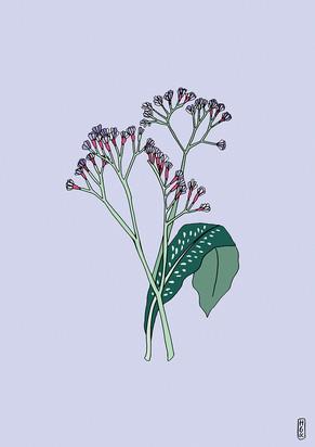 Flora on Purple