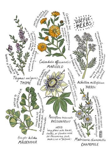 6 Useful Herbs