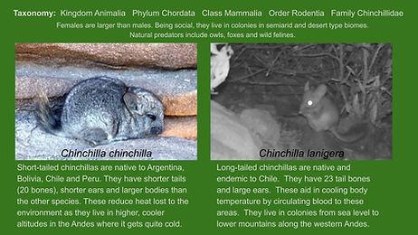 chin_times (6) (1).jpg