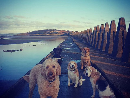 EDINBURGH'S BEST DOG WALKS