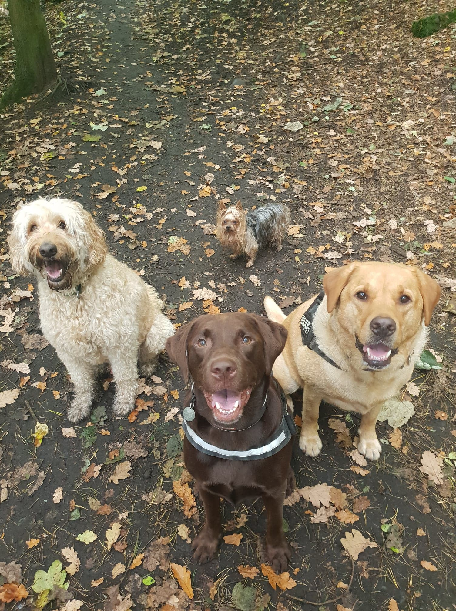 Smiles at Corstorphine Hill