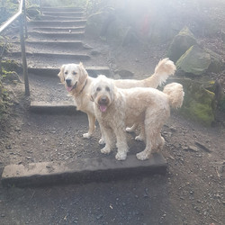 doodle and murphy