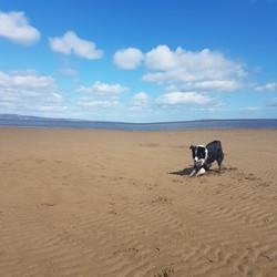 charlie on the beach